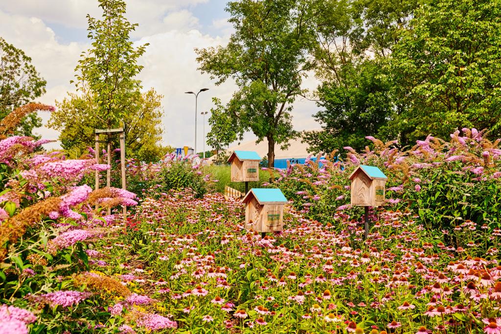 park-kieszonkowy-w-krakowie-ogrod-motyli.jpeg